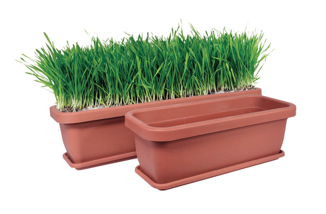 В чем выращивать рассаду выбираем правильную емкость На